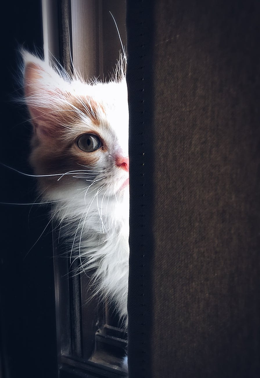 is cat breeding profitable