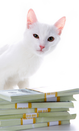 how much you should charge for kittens