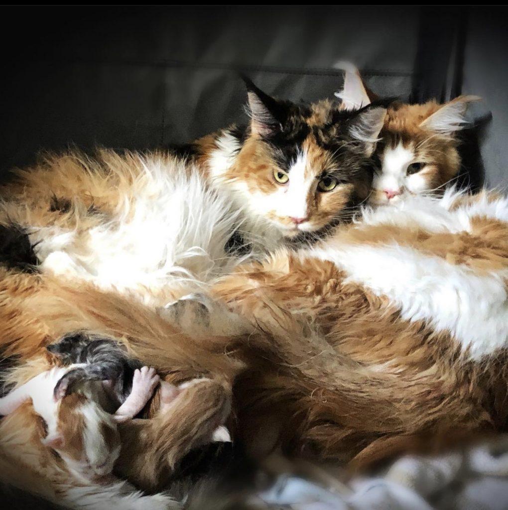 multiple litters of kittens