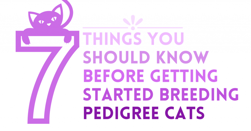 things you should know about breeding cats